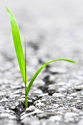 Abstract Royalty-Free and Rights-Managed Images - Grass in asphalt by Elena Elisseeva