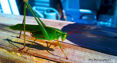 Photograph - Grass Hopper by Marty Gayler