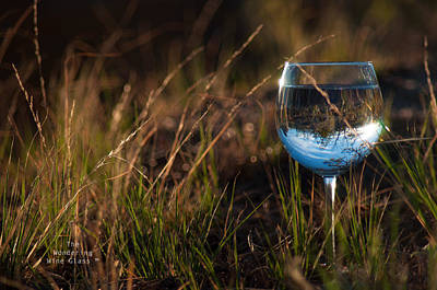 Photograph - Grass In A Glass... by Bob  Novotney