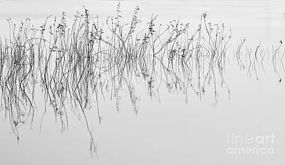 Grass In Lake Art Print