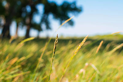 Photograph - Grass In The Prairie by Nathan Hillis
