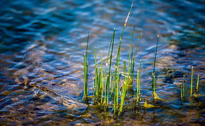 Onyonet Studios Photograph - Grass In The Water by  Onyonet  Photo Studios