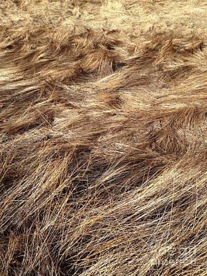 Photograph - Grass  by Mark Messenger