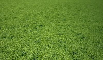 Grass Meadow, Artwork Art Print by Leonello Calvetti