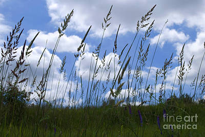 Photograph - Grass Meets Sky by Bill Thomson