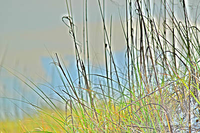 Photograph - Grass Of The Dunes by Gary Smith