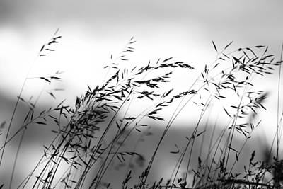 Photograph - Grass On Mount Iwaki by Brad Brizek