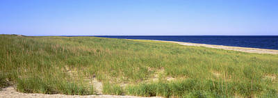Cape Cod Photograph - Grass On The Beach, Cape Cod by Panoramic Images