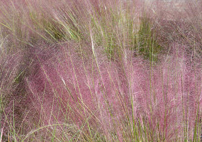 Photograph - Grass Photography - Soft - By Sharon Cummings by Sharon Cummings