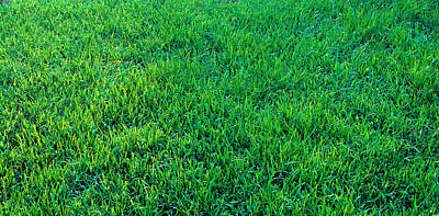 Grass Sacramento Ca Usa Art Print by Panoramic Images