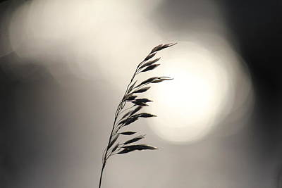 Photograph - Grass Seed by Trent Mallett