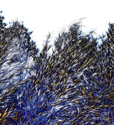 Art Print featuring the digital art Grass Solarisation by Rudi Prott