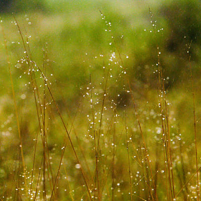 Photograph - Grass Sparkles by Alistair Lyne
