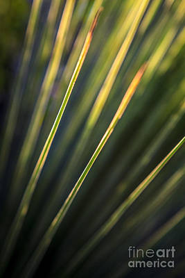 Photograph - Grass Tree Green Abstract by Silken Photography
