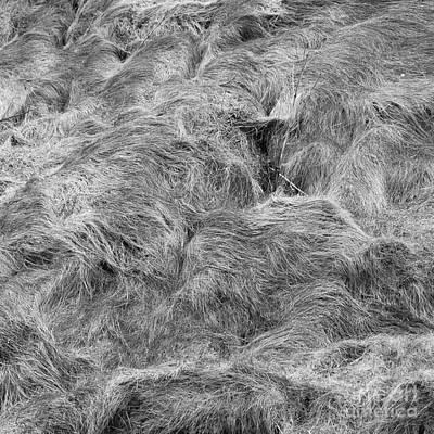 Photograph - Grass Wall 3 by Paul Davenport