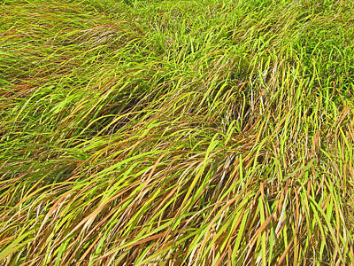 Grass Weather Art Print by Pete Marchetto