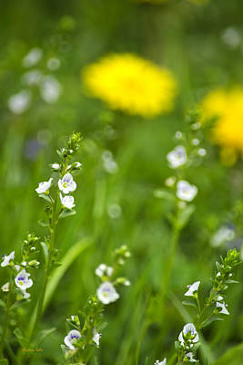 Photograph - Grass Wildflowers by Christina Rollo