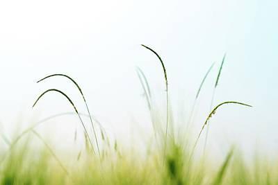 Grass Art Print by Wladimir Bulgar/science Photo Library