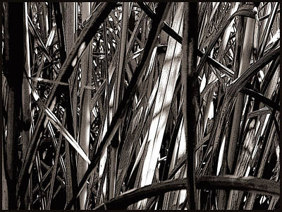 Photograph - Grasses 2 by Colleen Cannon