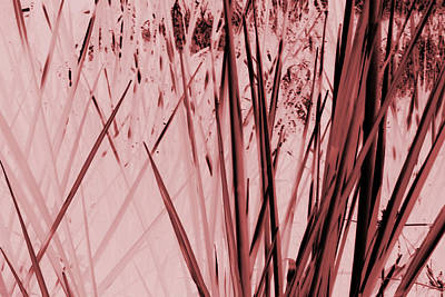Photograph - Grasses by Colleen Cannon