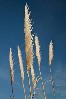 Photograph - Grasses by David Davies
