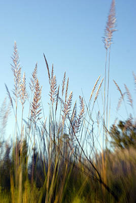 Photograph - Grasses In The Breeze by Beverly Stapleton