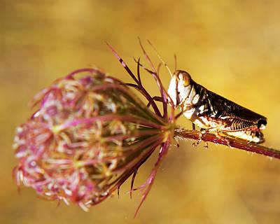 Photograph - Grasshopper by Belinda Greb