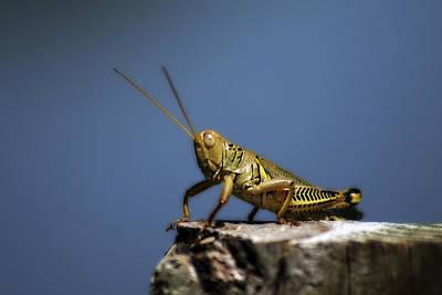 Photograph - Grasshopper by CE Haynes