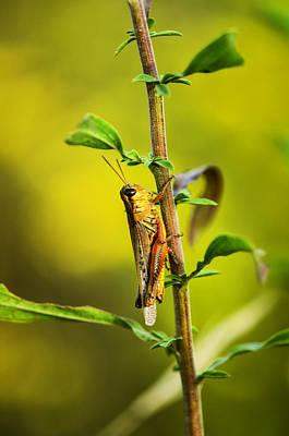 Grasshopper Wall Art - Photograph - Grasshopper Days by Susan Capuano