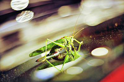 Grasshopper Disco Art Print by Gynt