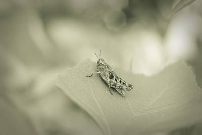 Photograph - Grasshopper - Dreamers Garden Series by Marco Oliveira
