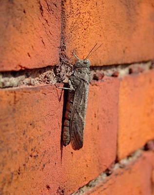 Grasshopper Digital Art - Grasshopper by Gothicrow Images