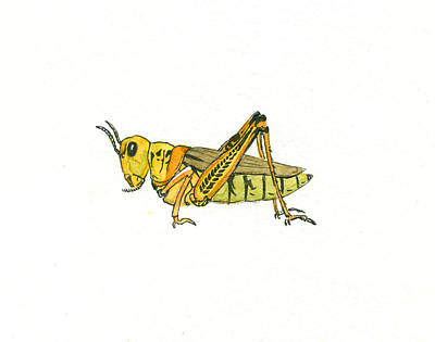 Painting - Grasshopper by Katherine Miller
