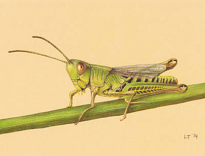 Grasshopper Drawing - Grasshopper by Lars Furtwaengler