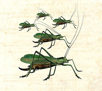 Grasshopper Digital Art - Grasshopper Parade 2 by Antique Images
