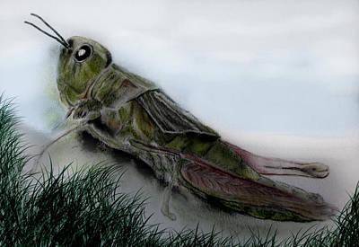 Grasshopper Resting Art Print by Cynthia Adams