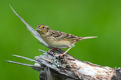 A White Christmas Cityscape - Grasshopper Sparrow by Robert McAlpine