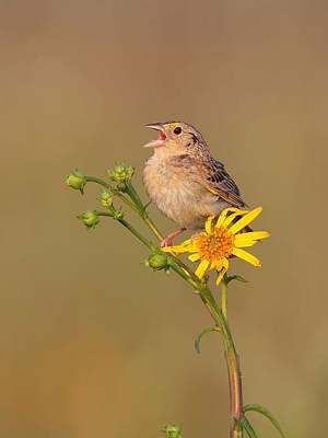 Art Print featuring the photograph Grasshopper Sparrow Singing by Daniel Behm
