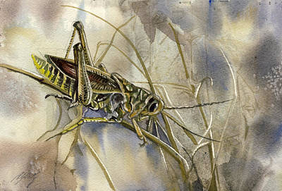 Grasshopper Watercolor Art Print by Alfred Ng
