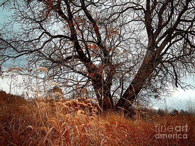 Photograph - Grassland by Tom Griffithe