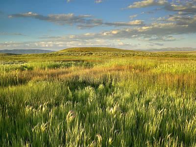 Arapaho National Wildlife Refuge Photograph - Grasslands  Arapaho Nwr by Tim Fitzharris