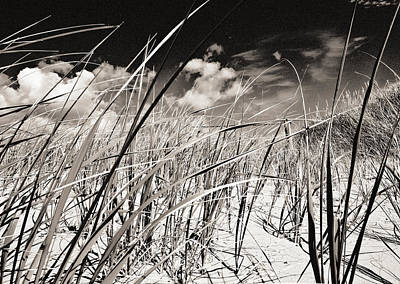 Photograph - Grassy Dunes by Arkady Kunysz