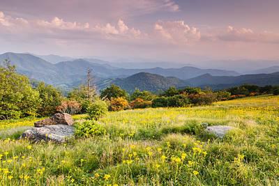 Golden Ragwort Photograph - Roan Mountain Grassy Meadow by Carol VanDyke