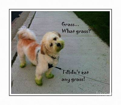 Grassy Puppy - Dog - Curiosity - Eating Grass Art Print by Barbara Griffin
