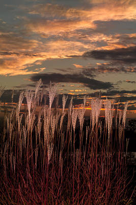 Photograph - Grassy Sunset by Ron Pate