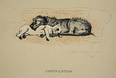 Bull Terrier Drawing - Gratification, 1930, 1st Edition by Cecil Charles Windsor Aldin