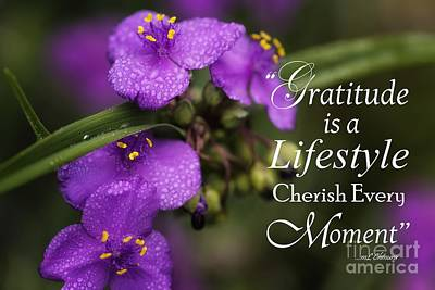 Photograph - Gratitude Is A Lifestyle by Mary Lou Chmura