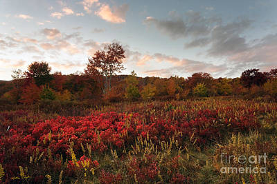 Photograph - Graveyard Fields 2010 by Matthew Turlington