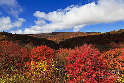 Photograph - Graveyard Fields In The Mountains by Jill Lang