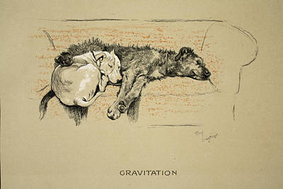Terriers Drawing - Gravitation, 1930, 1st Edition by Cecil Charles Windsor Aldin